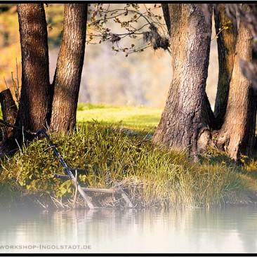 Herbst Fluss Naab