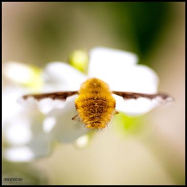 Insekt Makrofotografie Fotoworkshop Ingolstadt