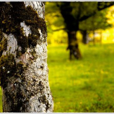 Ahornboden-landschaftsfotografie_4