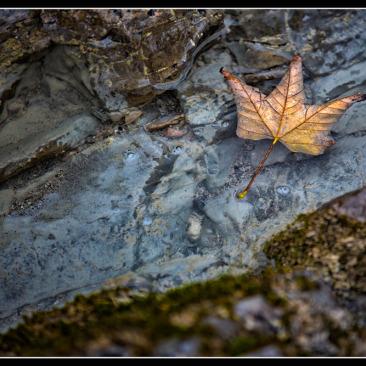 Herbstlaub Fotoworkshop Ingolstadt