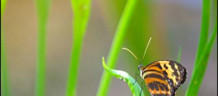 Schmetterling Makrofotografie Fotoworkshop Ingolstadt