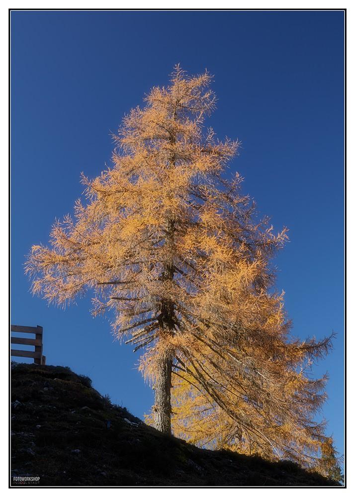 Lerche im Herbst