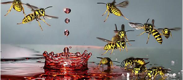 Makrofoto Wespen Wasserkrone