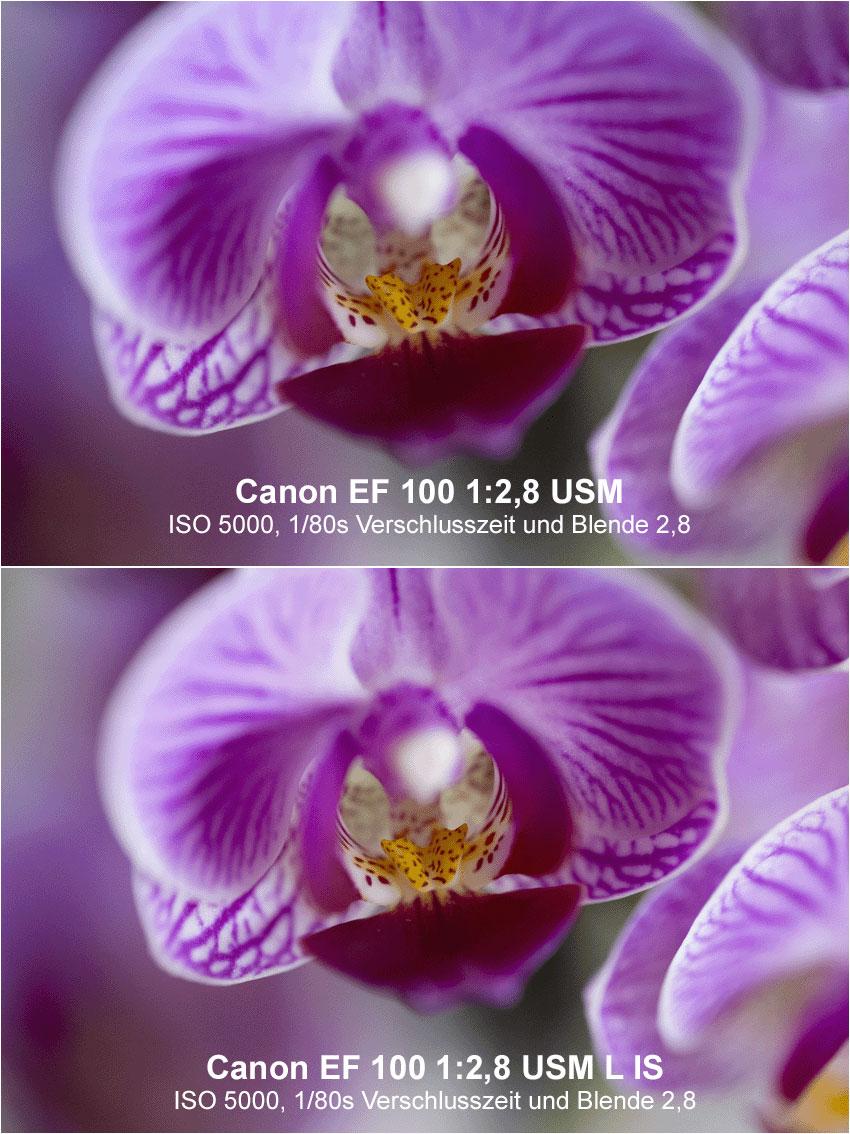 Makro Orchidee