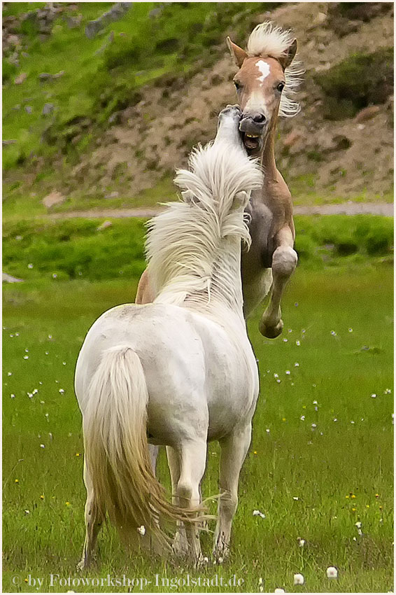 Pferde Riffelsee