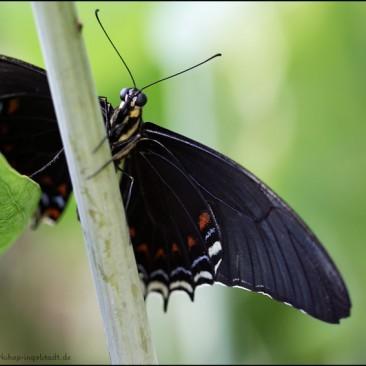 tropische Schmetterlinge Fotoworkshop Ingolstadt