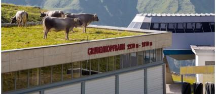 Kühe Hausbesetzer Fotoworkshop Ingolstadt