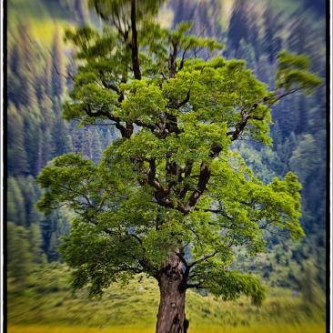 Ahornboden Tirol Karvendel