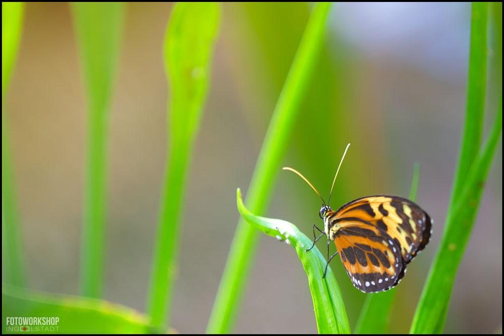 Bild der Woche Schmetterling Fotoworkshop Ingolstadt