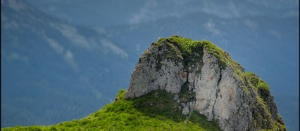 Alpenwiese mit Kuh