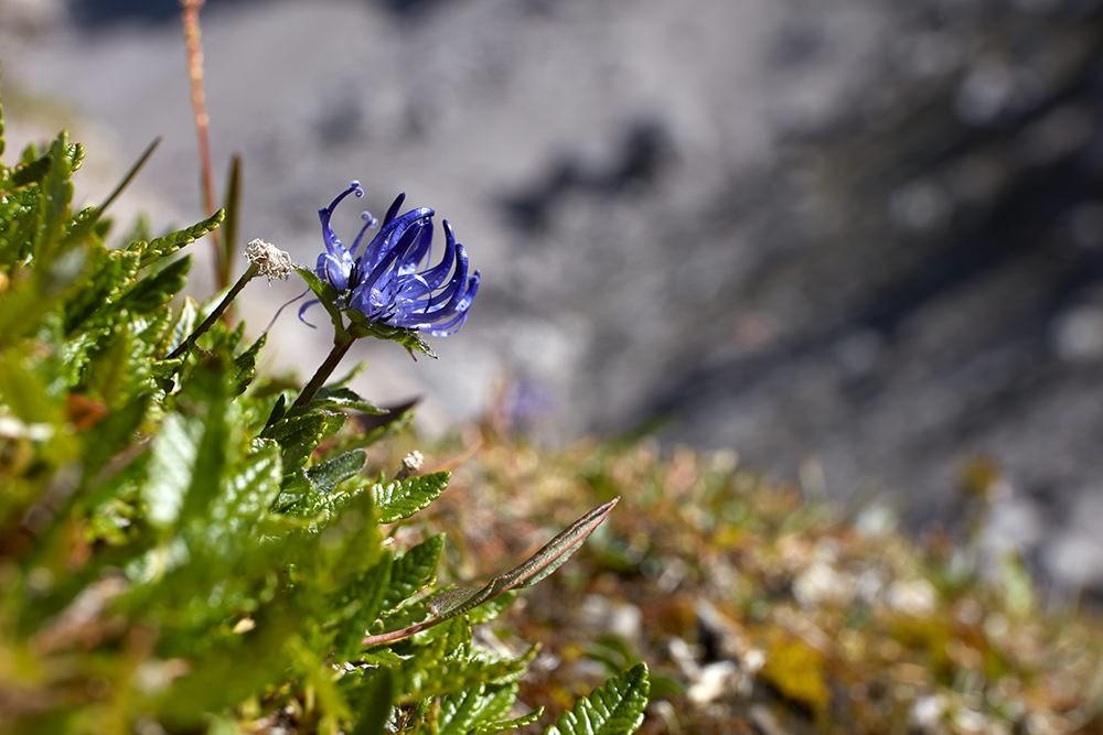 Blüte einer Blume