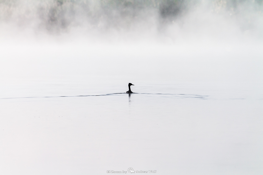 Ente im Wasser schwimmend